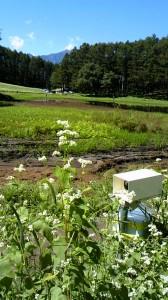 装置の向こうは「幻の池」です。北アルプスの鹿島槍ヶ岳も見えます。